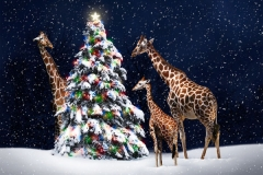 Giraffes Holiday Card