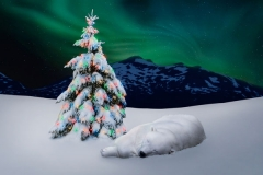 Polar Bear Northern Lights Holiday Card