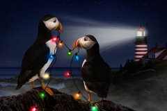 Puffins Holiday Card